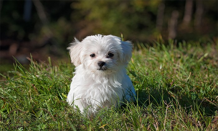 What do Your Clients consider Your Cbd Oil For Pet Dogs Uk Amazon.com?